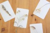 botanicalclass